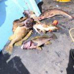 オホーツク 五目釣り
